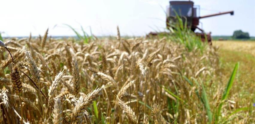 """Nestašica pšenice na svjetskim tržištima, žitarica postaje """"žuta nafta"""""""