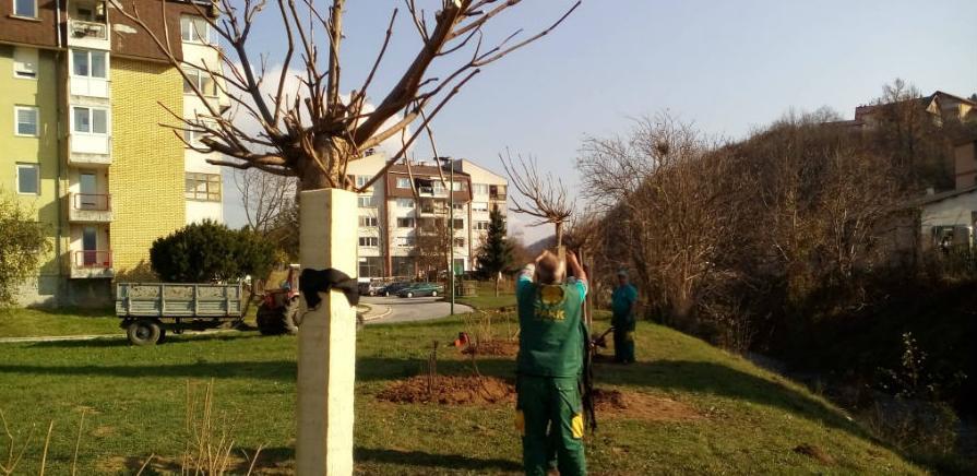 Nova stabla i ukrasno grmlje u sarajevskim parkovima