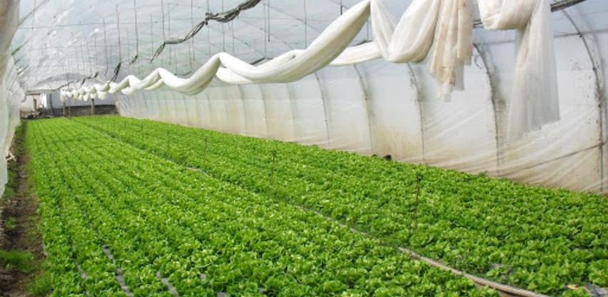 Plastenička proizvodnja u ekspanziji, domaće povrće već u marketima