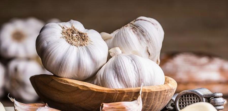 Hercegovački bijeli luk među pet najkvalitetnijih u svijetu
