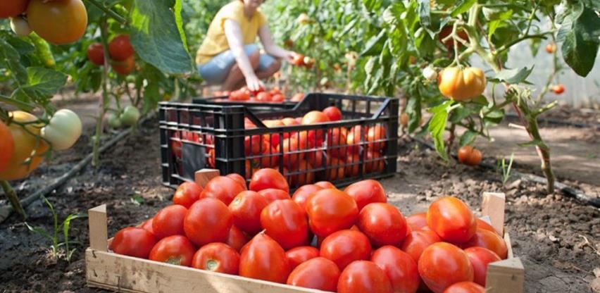 Siguran put do tržišta: Neće propasti ni kg domaćeg povrća