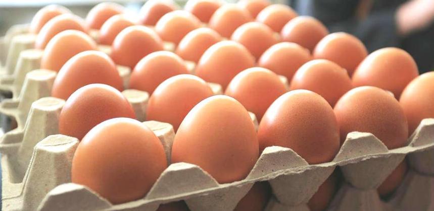 Odobren izvoz jaja iz BiH u Evropsku uniju