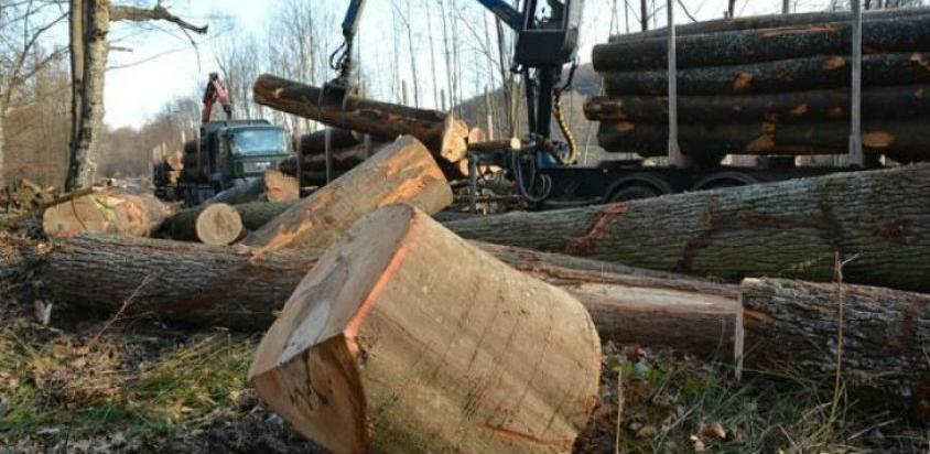Neophodna zabrana izvoza drvno-šumskih sortimenata