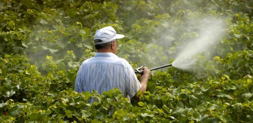 Od 195 analiziranih uzoraka četiri sadržavali ostatke pesticida