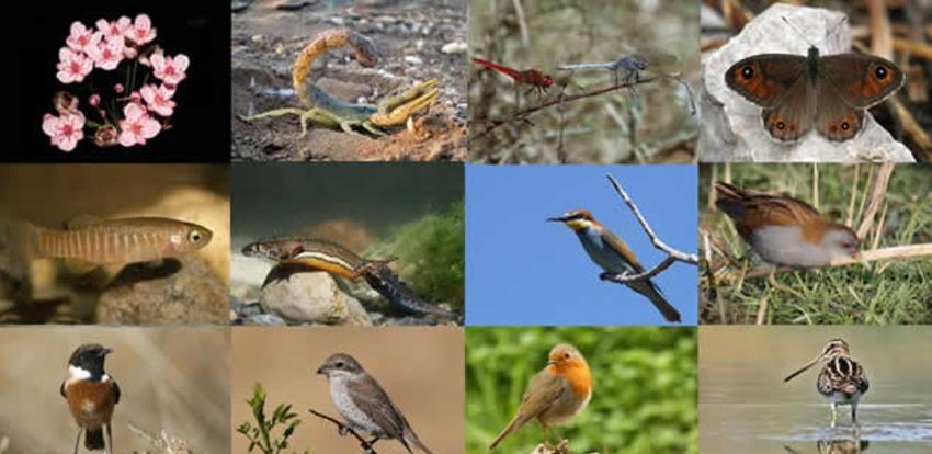 22. maj, Međunarodni dan biodiverziteta: Hitno povećati broj zaštićenih područja u BiH