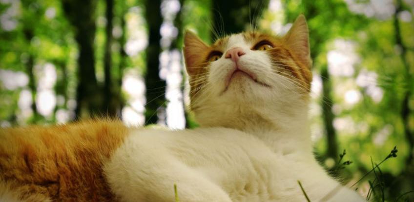 Mitovi o mačkama u koje mnogi vjeruju