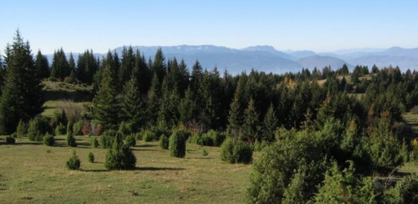 Ustavni sud BiH u naredna dva dana odlučuje o ustavnosti Zakona o šumama RS