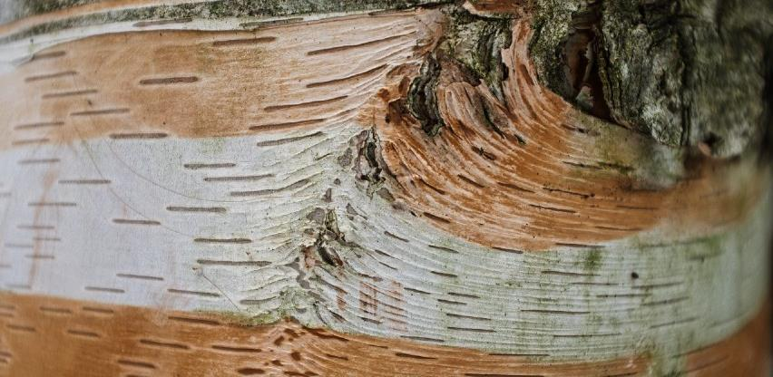 Manja proizvodnja, veća prodaja šumskih sortimena