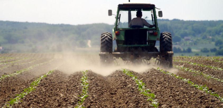 Ukupna poljoprivredna proizvodnja u 2017. smanjena za 17,4 posto