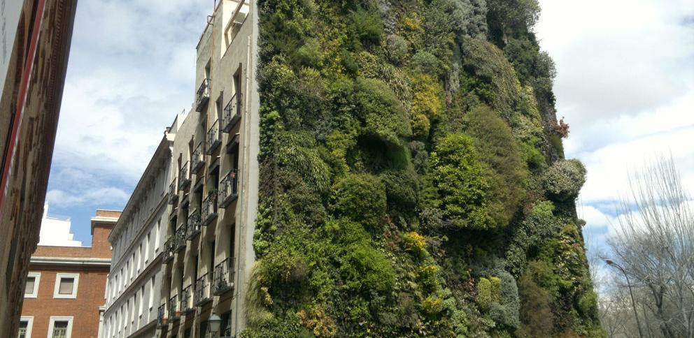Zgrada u Sarajevu dobija zelenu fasadu od biljnog rastinja