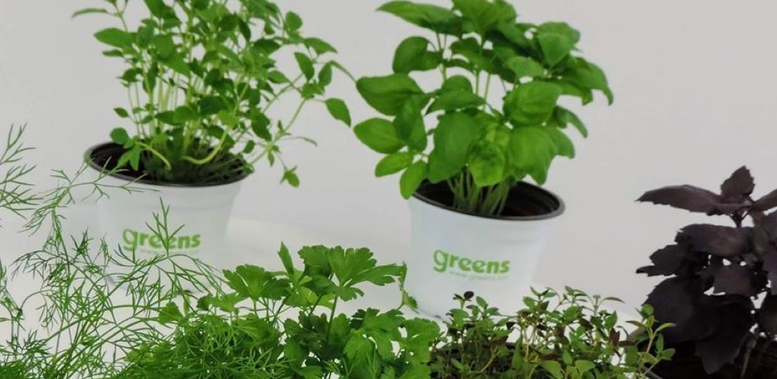 Projekat 'Greens': Proizvode mikropovrće i zapošljavaju osobe sa invaliditetom