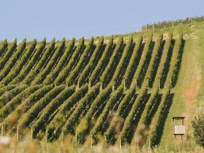 Hrvatska među deset najboljih svjetskih vinskih regija