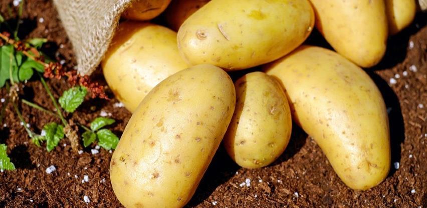 Suša smanjila prinose krompira