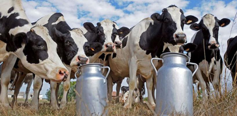 Saradnja BiH s Iranom u oblasti veterinarstva olakšat će promet životinja