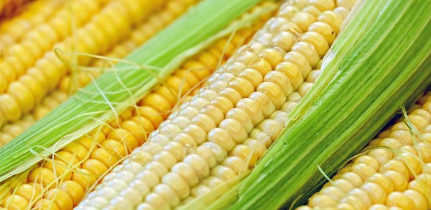 Podrška proizvođačima merkantilnog kukuruza