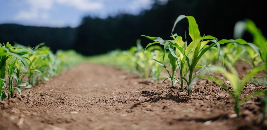 Ideje za pomoć poljoprivrednicima: Subvencionirati one koji se žele baviti poljoprivredom