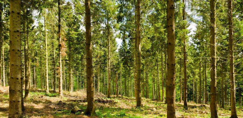 Zakon o izmjeni Zakona o šumama Kantona Sarajevo