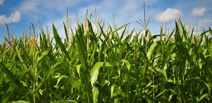 Sintezom rada institucija pomoći poljoprivrednike