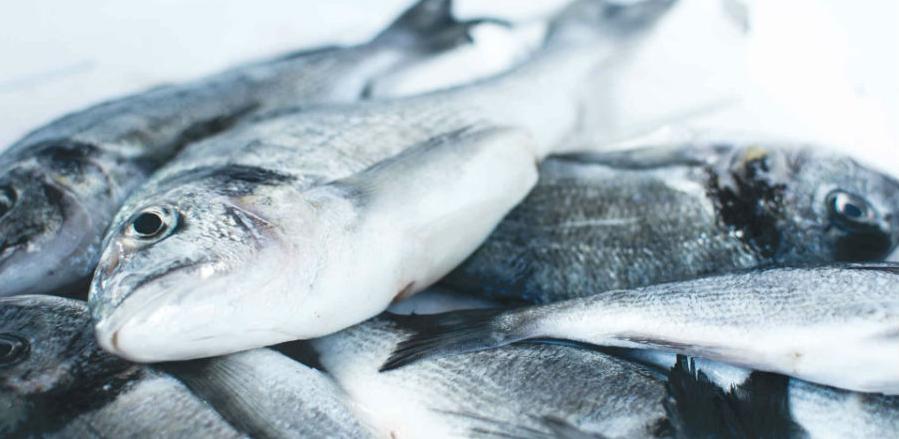 Proizvodnja konzumne ribe u BiH manja za oko tri posto