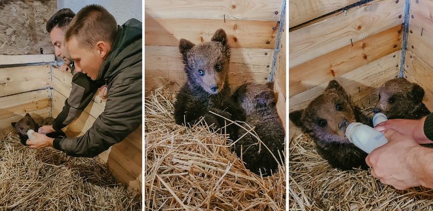 Medvjedići iz Kreševa stigli u novi dom, Bingov zoološki vrt u Tuzli