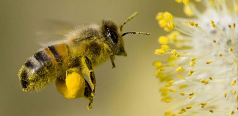 Pčelinji fond na području FBiH oštećen za 60 posto