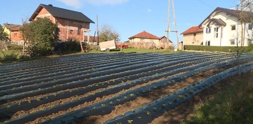 Uz podršku Turske razvojne agencije u Cazinu započet projekt sadnje jagoda