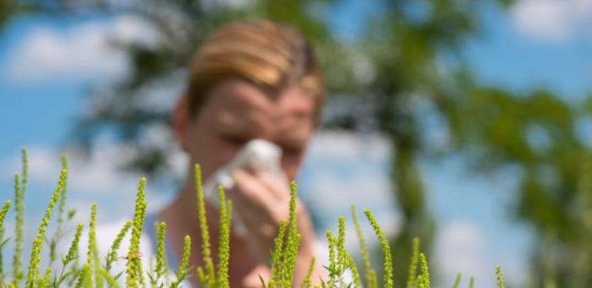 U KS-u zatražen inspekcijski nadzor zbog visoke koncentracije polena