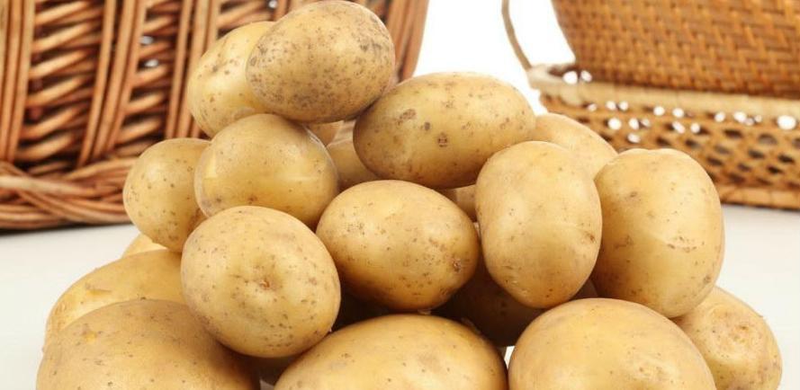 Na Sokocu će proizvoditi sjeme bezvirusnog krompira