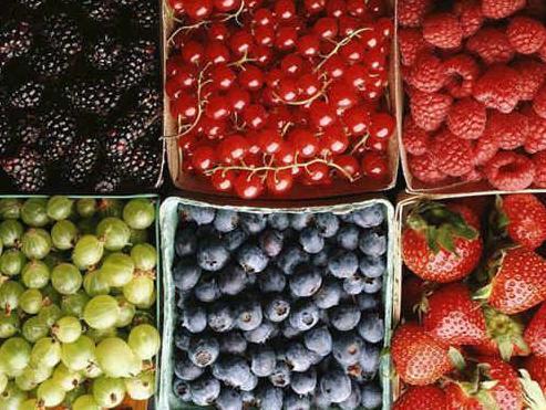 Uzgoj voća i povrća: Hladnjače spremne da otkupe sve što se proizvede