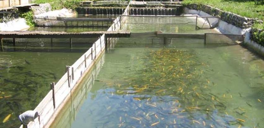 Stvoreni preduslovi za izvoz ribe iz BiH u Rusku Federaciju