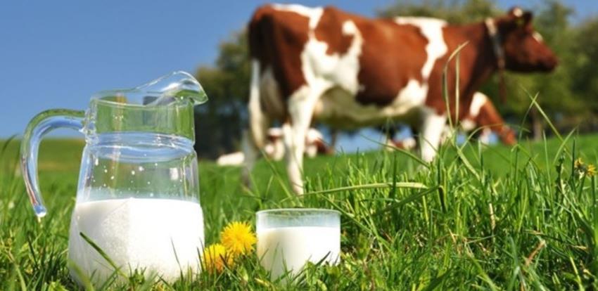 Paljanski proizvođači mlijeka povećali proizvodnju