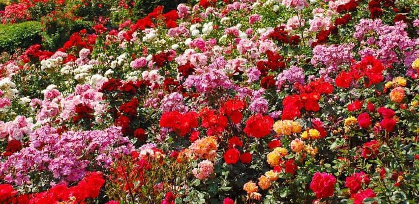 Srbija zaradila 4,2 miliona eura od izvoza cvijeća