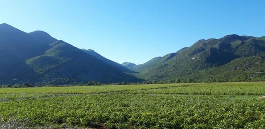 Za četiri godine uloženo dva miliona KM u poljoprivredu Trebinja