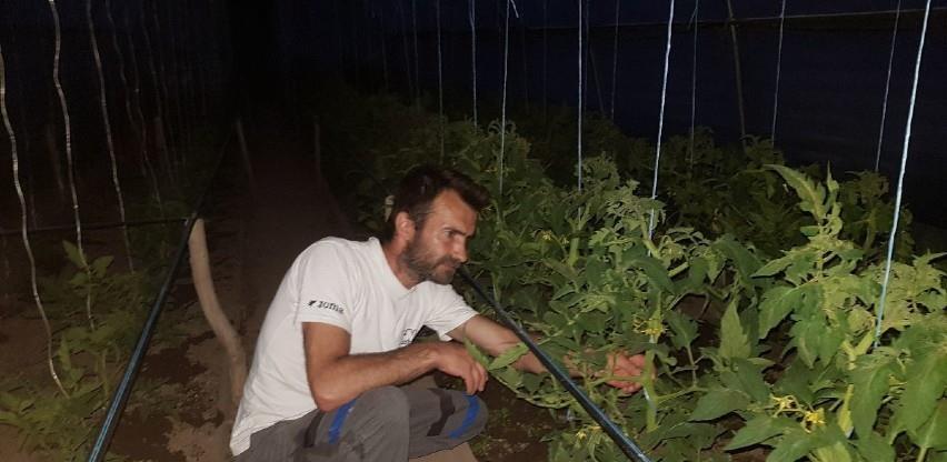Raste potražnja za batatom zbog lakog uzgoja i dostupnosti rasada