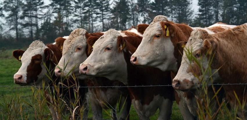 Poljoprivrednici u RS traže mjere zaštite domaće proizvodnje