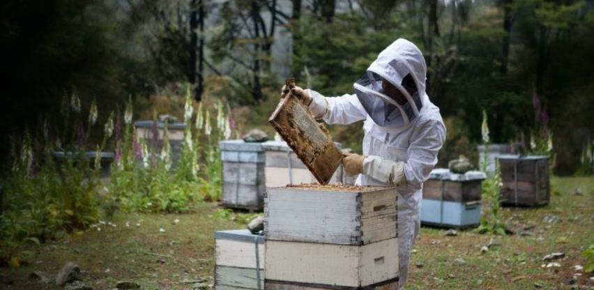Kongres pčelarstva okupio stručnjake iz cijelog svijeta