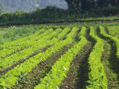 Herceg: Organska poljoprivredna proizvodnja velika šansa za razvoj