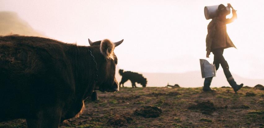 Proizvodnja mlijeka u BiH postaje sve modernija