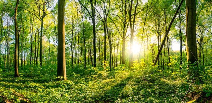 Za 50 posto umanjena naknada za opštekorisne funkcije šuma pravnim subjektima u KS
