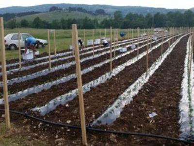 Općina Posušje oživljava zapuštene poljoprivredne površine