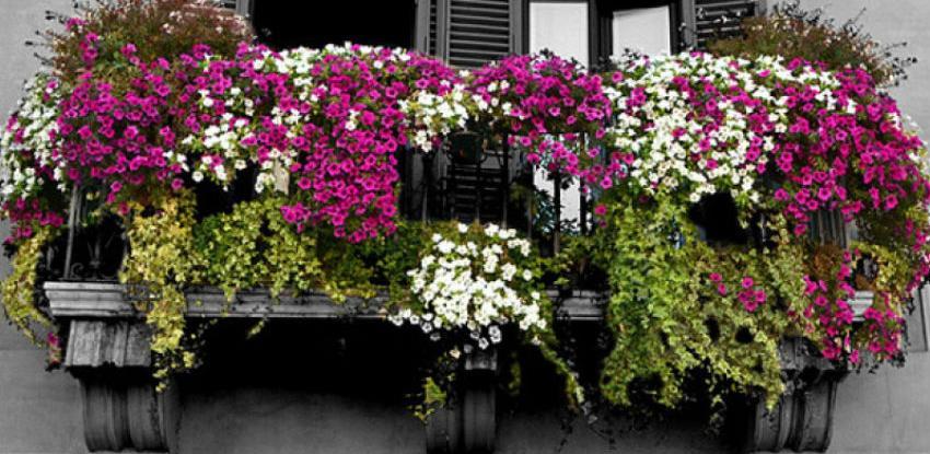 Općina Novi Grad bira najljepše uređen balkon, dvorište i ulaz u stambenu zgradu