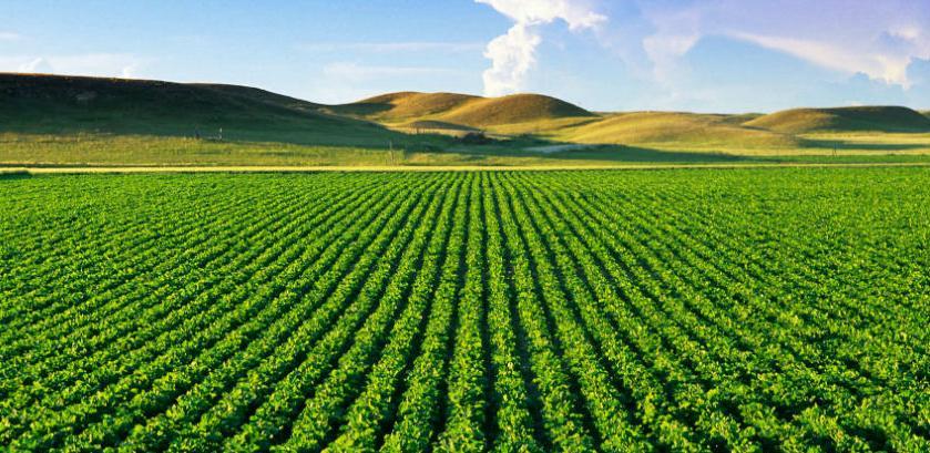 Revizija: Poticaji za poljoprivredu za 2017. nisu vršeni u skladu sa Zakonom