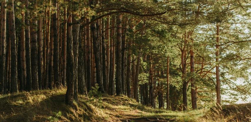 Izmjenama Zakona o šumama KS do potpunog ukidanja parafiskalnog nameta za općekorisne funkcije