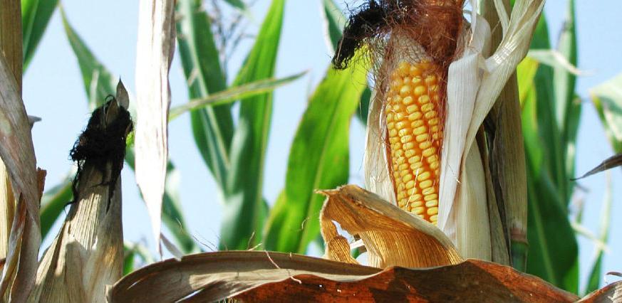 U Semberiji će se graditi biorafinerija za proizvodnju celuloznog etanola