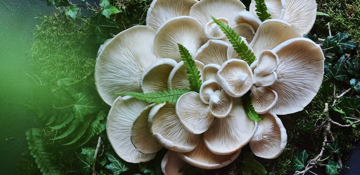 Priča o uspješnom biznisu: Fungi kultura u Tuzli završava prvu sezonu