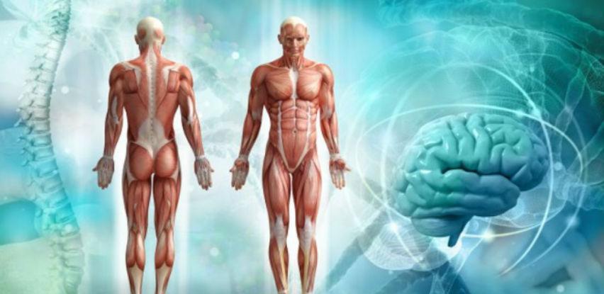 Kako stare ljudski organi?