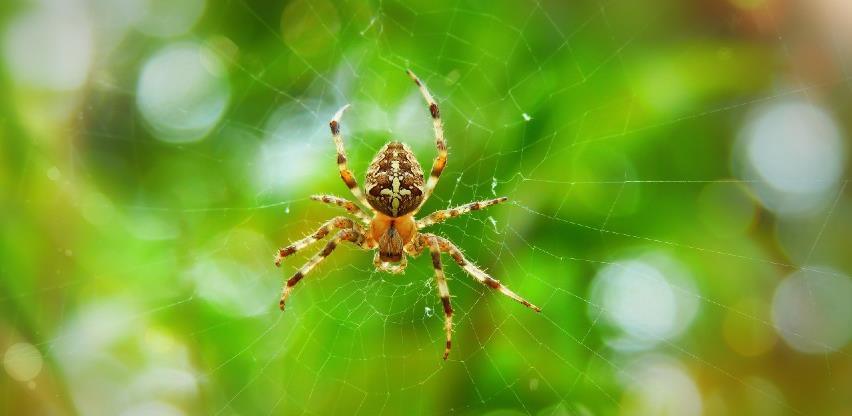 Tri trika uz koje ćete spriječite jesene pauke da vam ulaze u dom