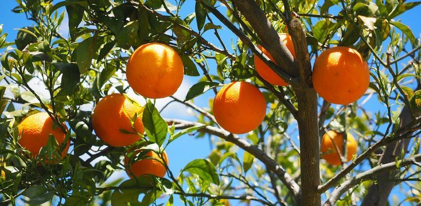 U Srbiji preko noći posječeno svih 280 stabala u voćnjaku