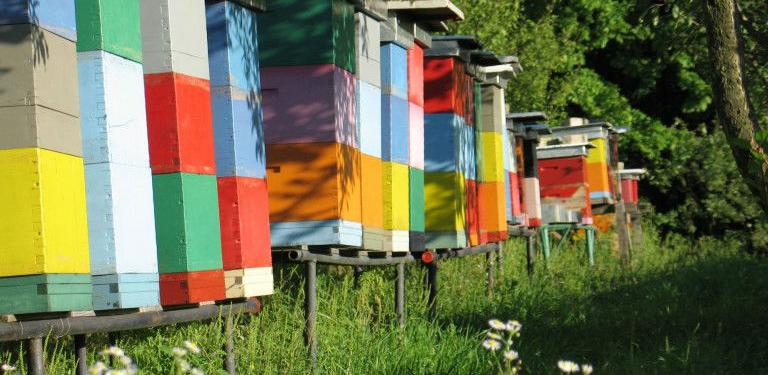 FARMA II: Grantovi u sektorima peradarstva i pčelarstva