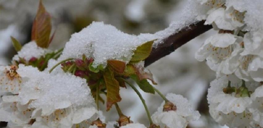 Mraz najviše štete pričinio zasadima kruške i šljive